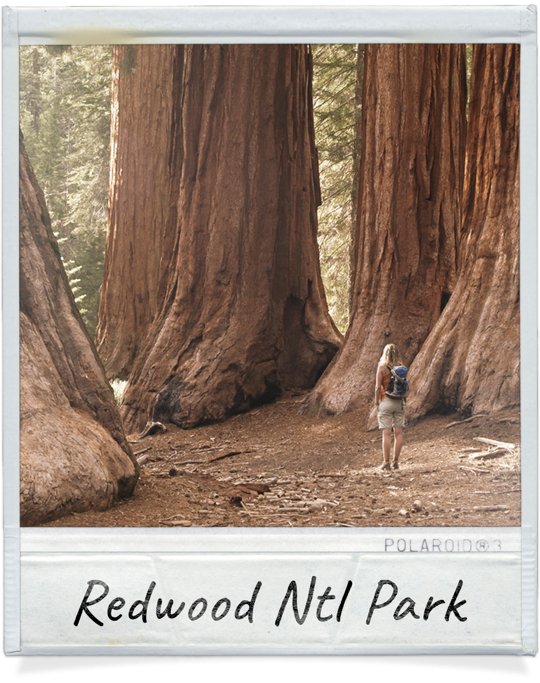 Redwood National Park near Redwood Meadows in Crescent City, CA