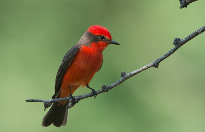 A brightly colored bird