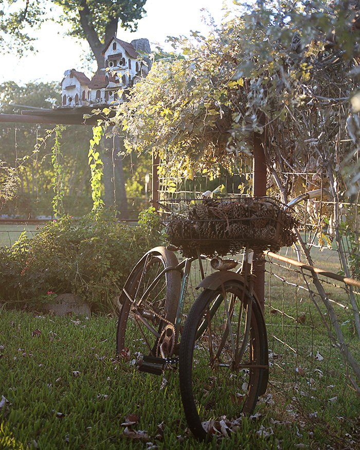 An old bicycle with a basket of pinecones