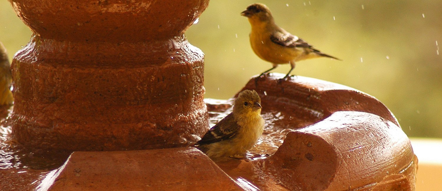 Villa del Faro amenities birds in fountain