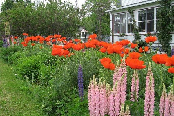 Harbourview Inn flower garden