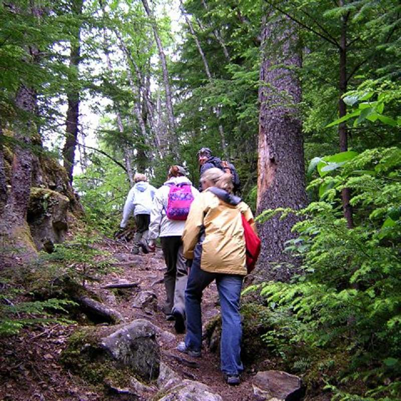 Group hiking through the forest