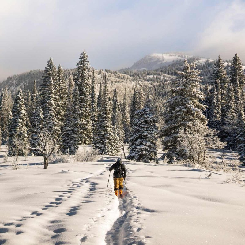 Man cross country skiing into forest