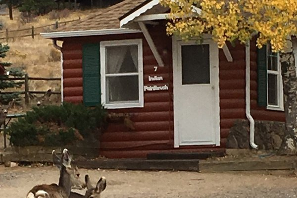 Colorado Cottages Indian Paintbrush Cottage exterior two deer in yard