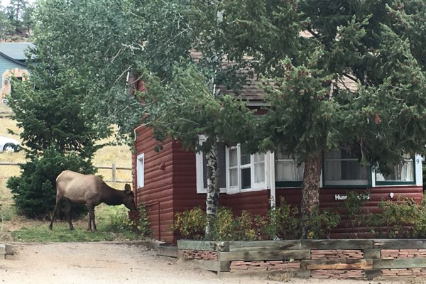 Colorado Cottages Hummingbird cottage exterior elk