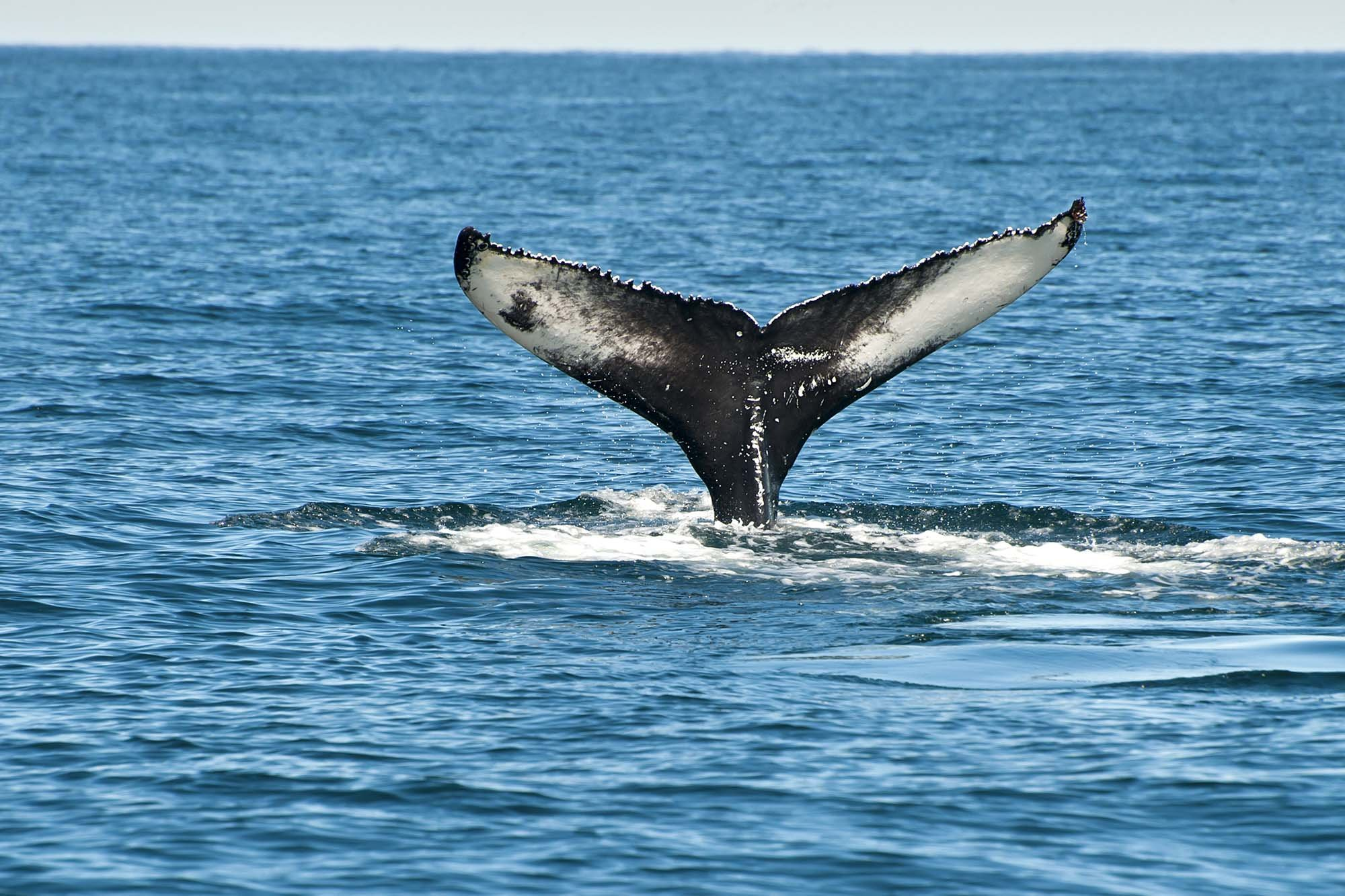 Monterey Bay Whale Watching