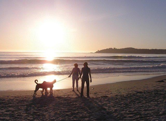 Dog enjoying Carmel beach