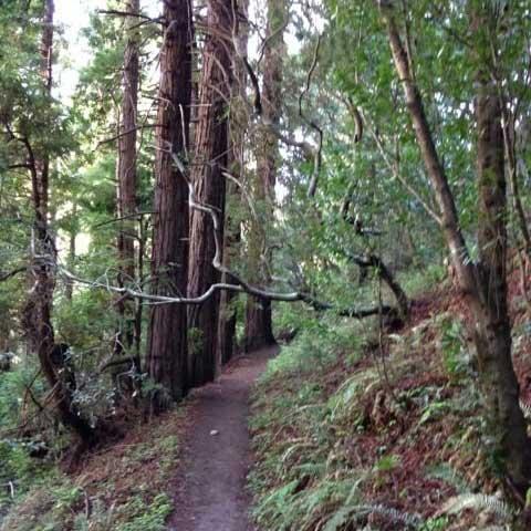 Forest walk - Carmel