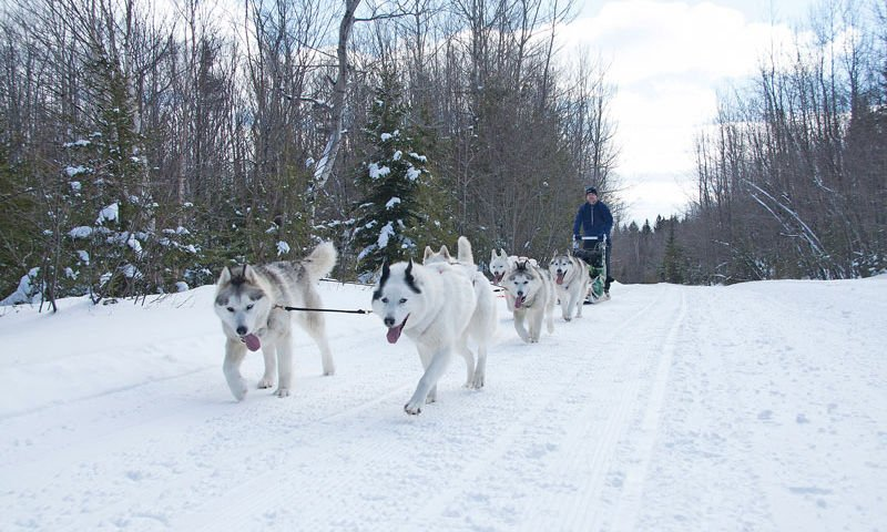 guy dog sledding