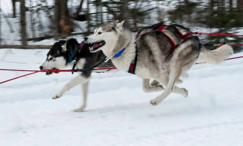 two dogs running in snow