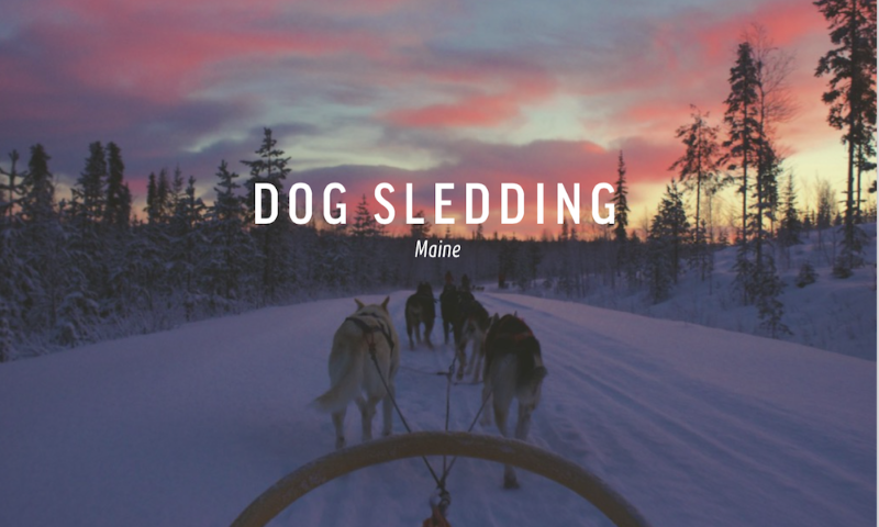 dog sledding maine