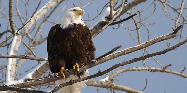 Winter Wildlife Eagle Cruise
