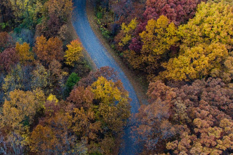 arial view of road and fall leaves