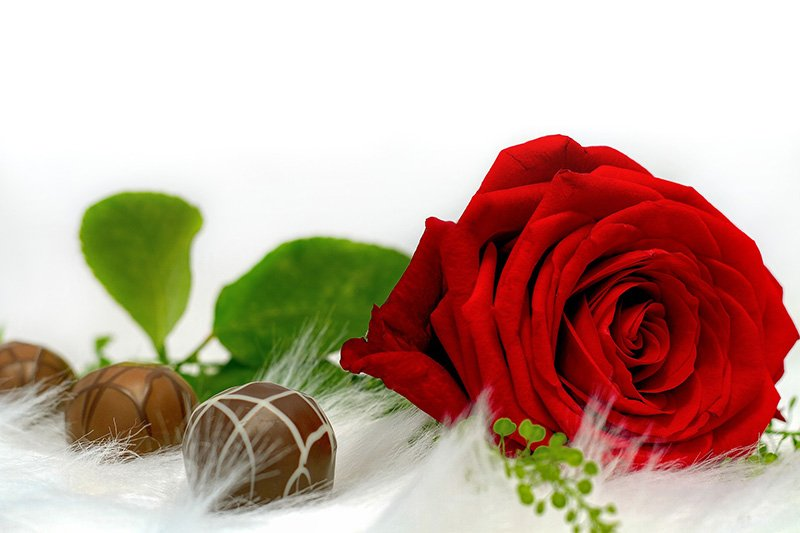 chocolates with red rose
