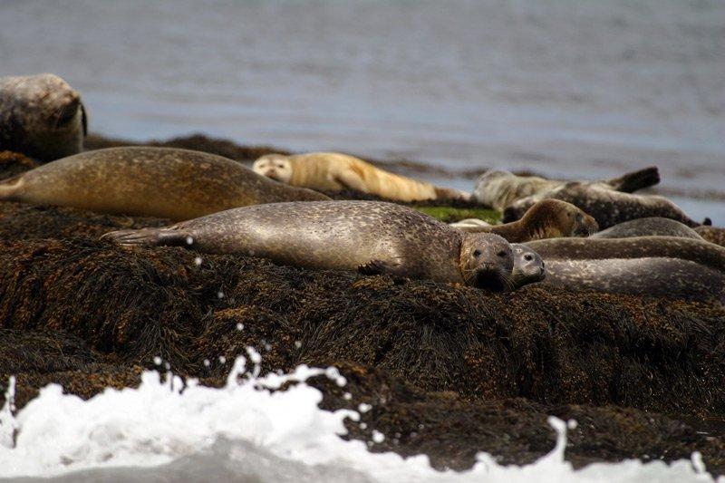 Spouter Inn Maine seals