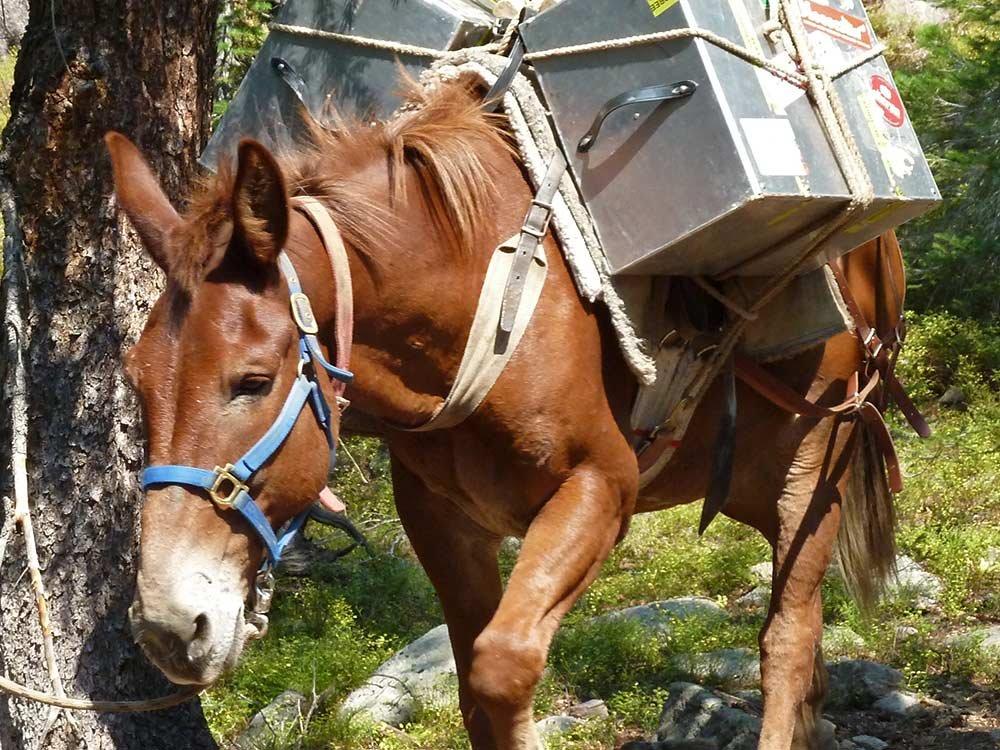 donkey carrying packs