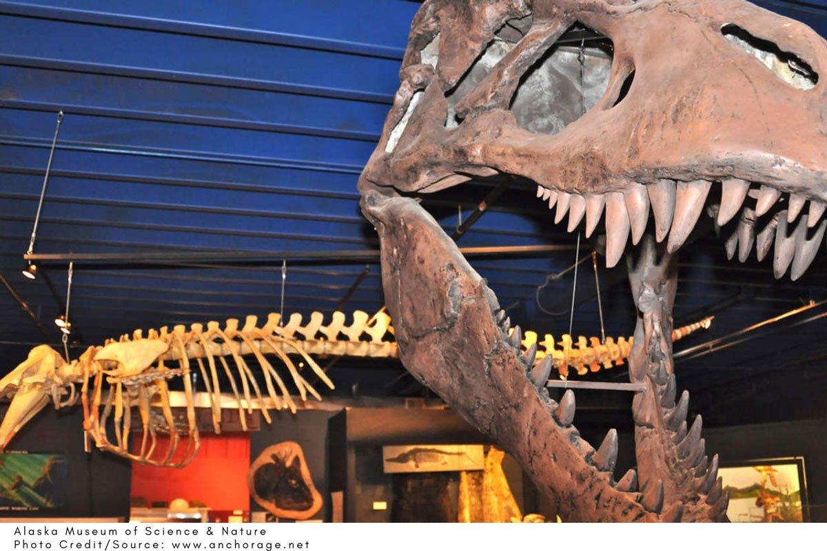 dinosaur fossils on display