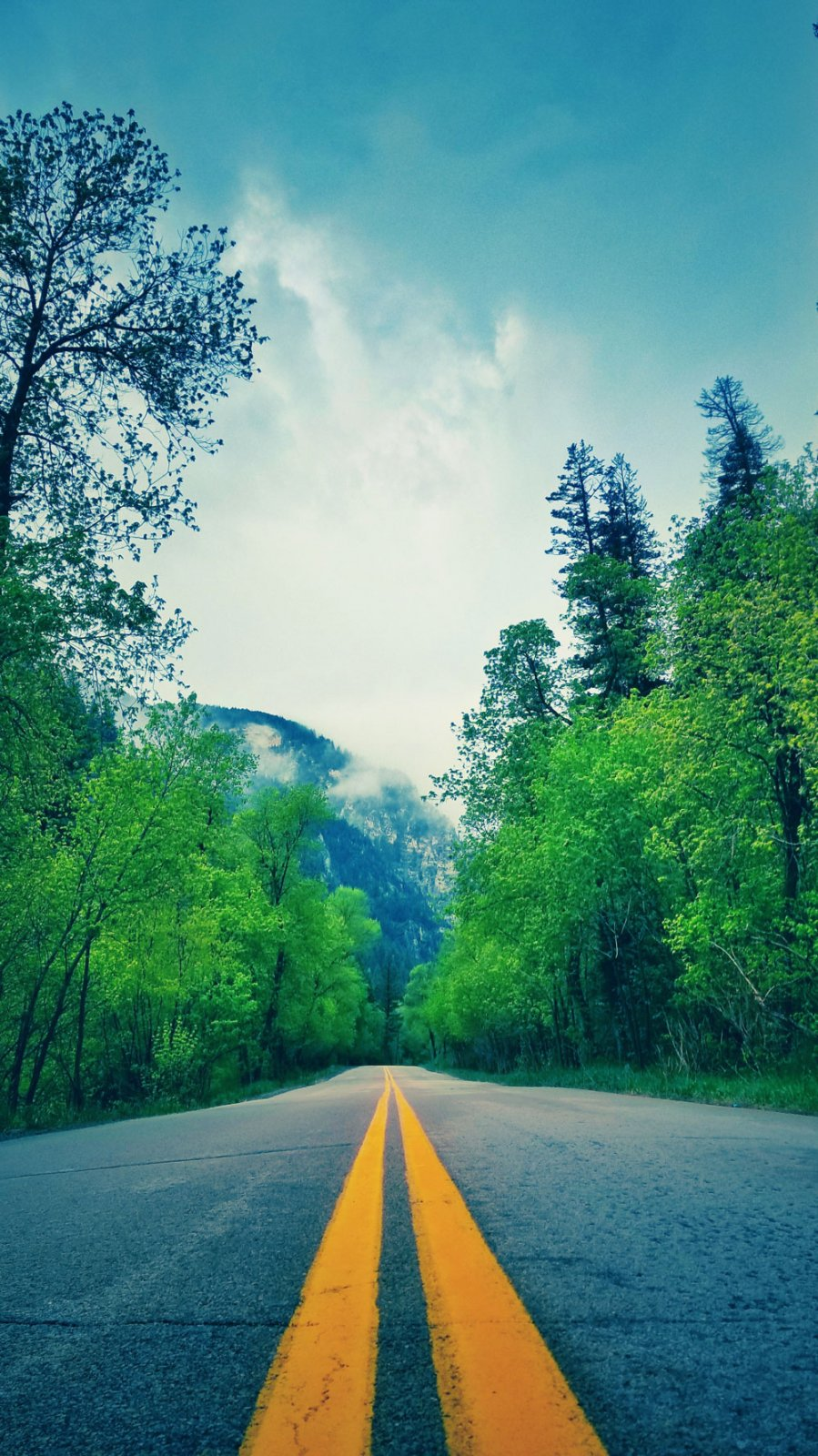 yellow road lines passing through green foliage on a cloudy day