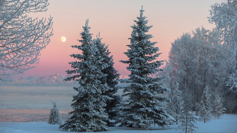 view of the moon between the snow-covered trees at sunset