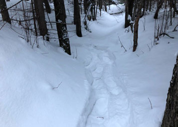 Snowshoeing trail in the woods