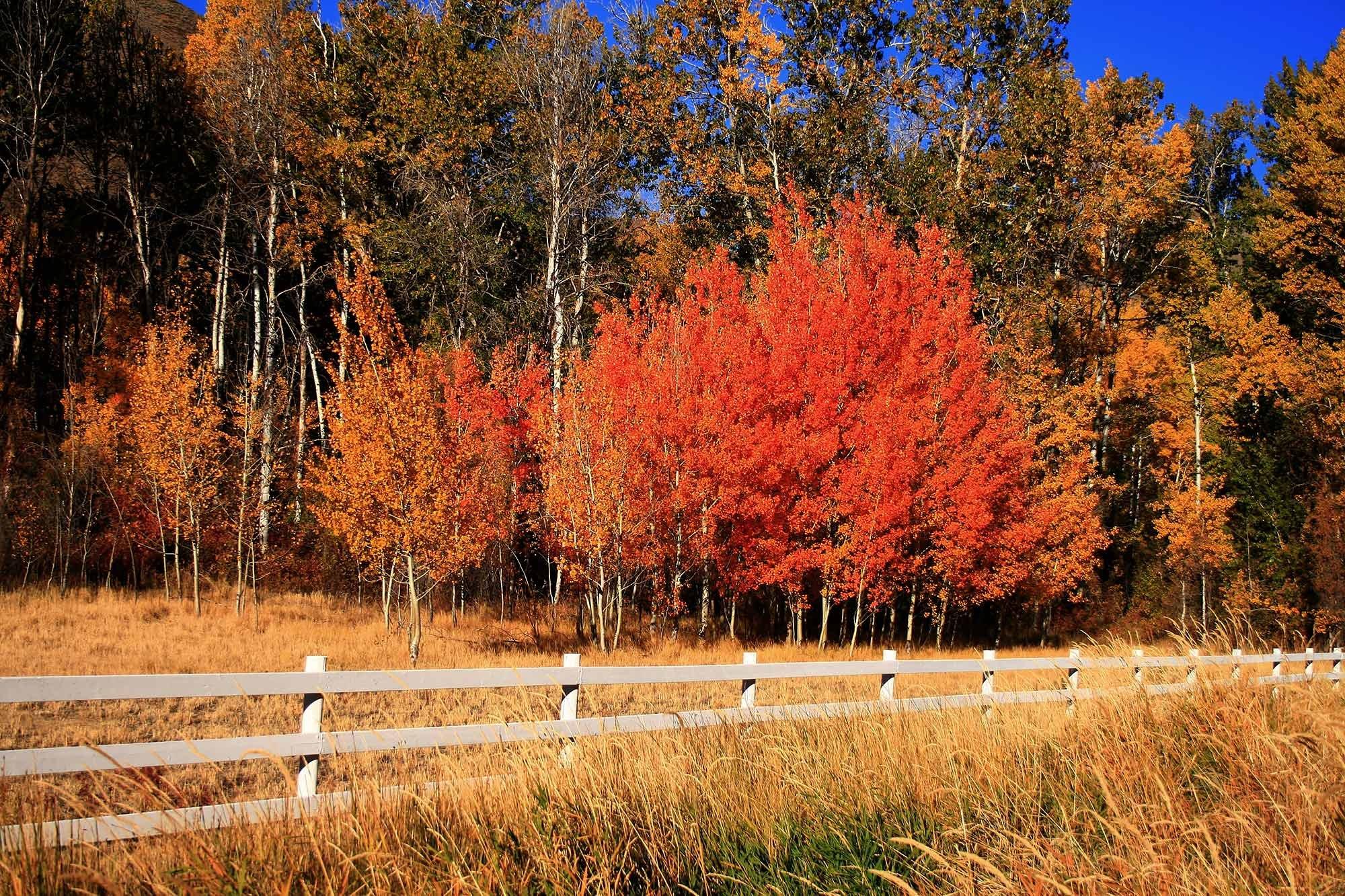 Autumn Trees Near Fence