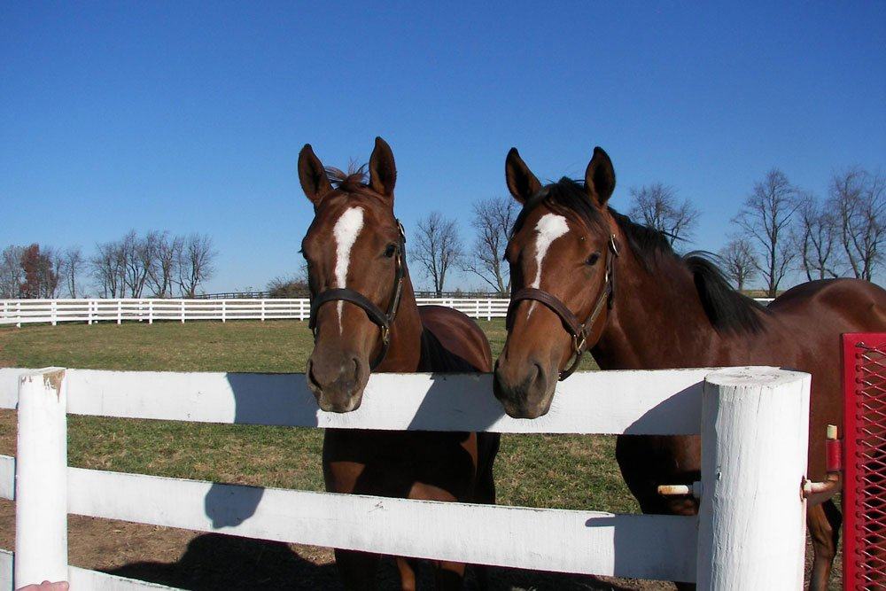 Two Horses leaning over fence