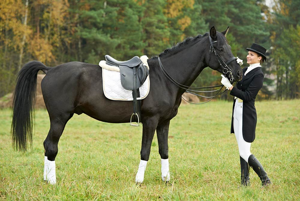 show horse and trainer