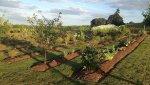 Garden of trees